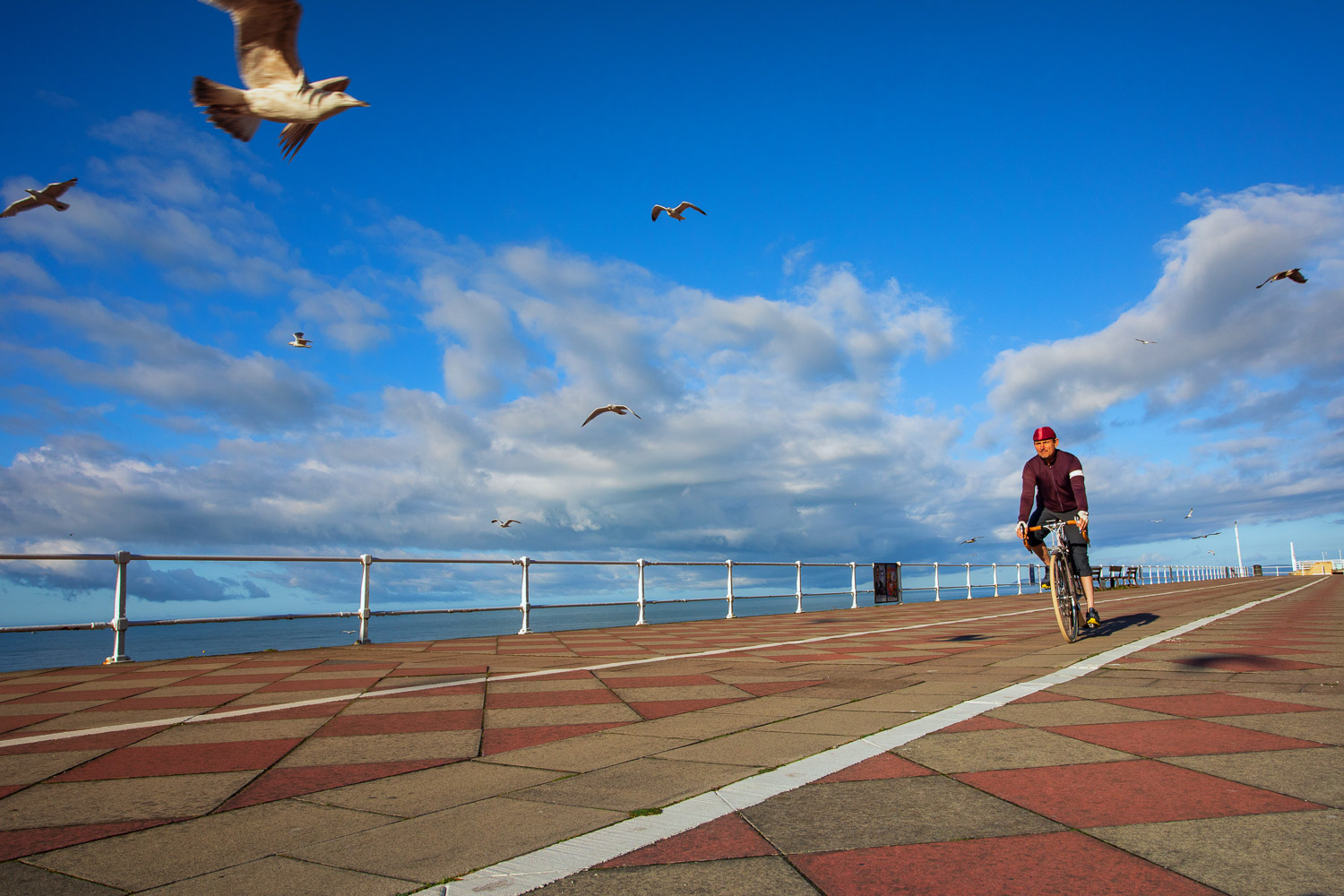 Bicycles in the Landscape:A cyclist spins along the seafront promenade in Hastings early on a bright sunny summer morning with a flock of seagulls wheeling overhead