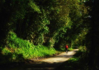 Leafy Sussex - pedalling along a lane near Rye