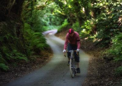 Through darkest Sussex - along an ancient sunken lane near Winchelsea