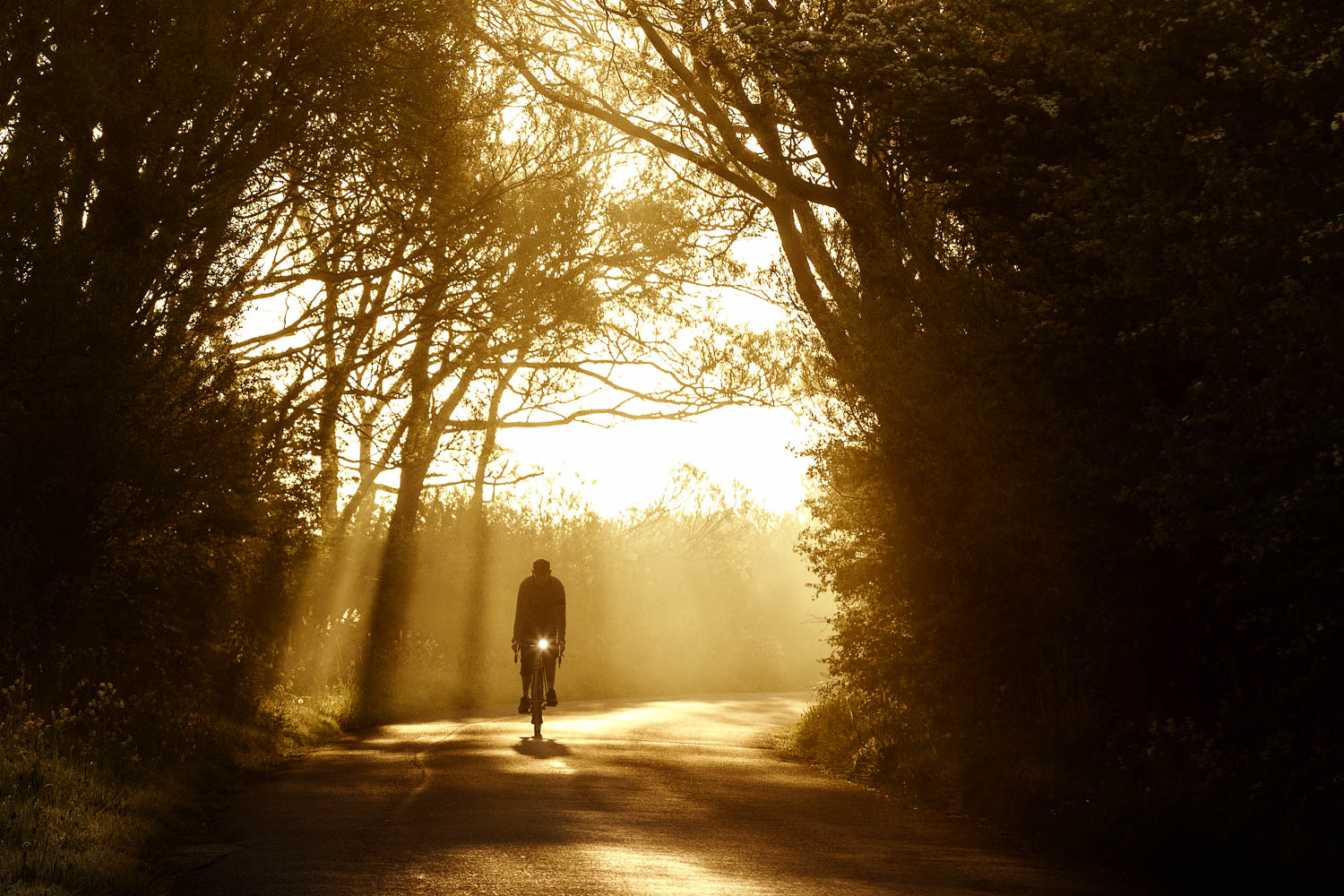 Cyclist on country lane backlit by a splayed fan of sunshine