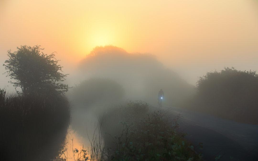 Golden  Mist on The Marsh