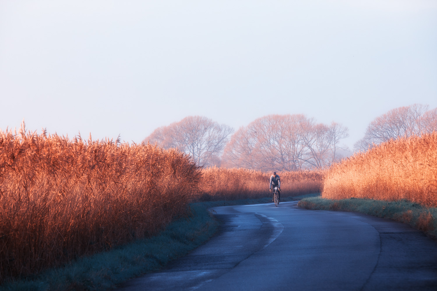 Early morning cyclist backlit by coppery sunrise, near Pevensey, East Sussex